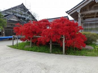 金蔵正願寺